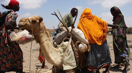 Ethiopian pastoralists receive insurance compensation for livestock loss