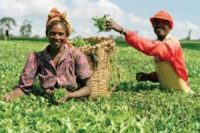 Report stresses agriculture's significance in transforming African economy