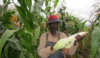 Food security at center of African Development Bank annual meeting