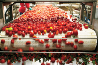 Return tax incentives or export Ethiopia warns agro-processors