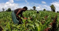 Africa Investor Forum to discuss tackling malnutrition
