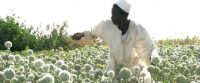 Sudan secures $41 million grant to boost agriculture