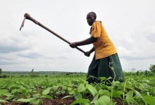 African Development Bank calls for Africa's green revolution