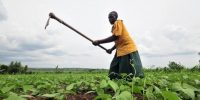 African Development Bank calls for Africa's green revolution