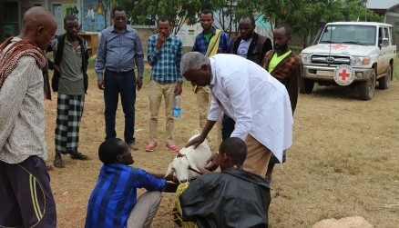 Red Cross assists pastoralists displaced by ethnic violence in Ethiopia