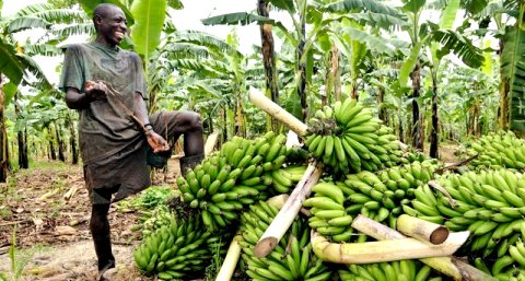Partners to raise $100 million to catalyse Africa's agriculture investment