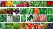 BASF acquires Bayer's vegetable seeds business
