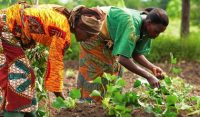 Partners to drive finance to African smallholder farmers