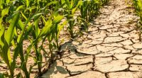 Africa Adaptation Initiative response to Africa biggest challenge