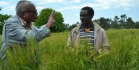 Lessons from Team Lemma's bold action to end rural poverty in Ethiopia
