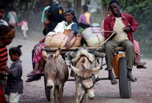 Donkeys get government attention in Ethiopia