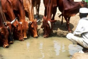Increasing water access for livestock in Africa's arid lands