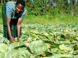 Uganda farmers get $210 million to improve farming