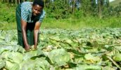 Uganda farmers get $210 million to improve farming