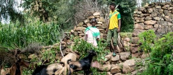Ethiopia assesses Tigray farmers' access to inputs, credit