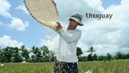 Uruguay to help Africa improve its agriculture