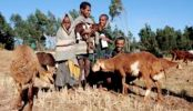 Ethiopian farmers to get nutrition information via hotline