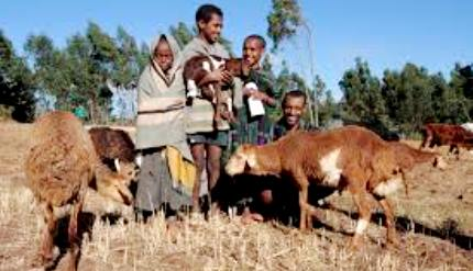 Ethiopian farmers to get nutrition information via hotline