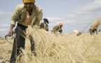 Corteva Agriscience to help Ethiopia boost cereals, fruit productivity