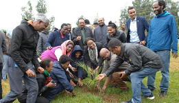 Ethiopia plants over 353 million trees in one day