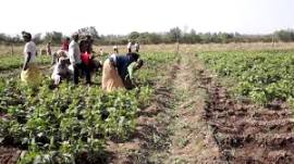 Start-up program set to support agriculture in Ethiopia
