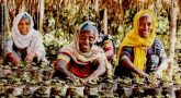 USAID, Awash Bank to help small agribusinesses in Ethiopia