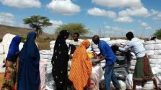 Somalia government makes progress in addressing internal displacements – report