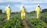 Bid to supply pesticides to Ethiopian corporation (Tender)