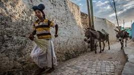 Smuggling donkeys from Ethiopia to Kenya increasing