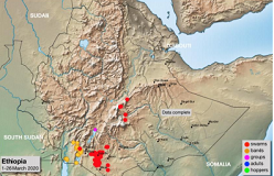 Desert locust to hit Ethiopia again