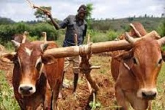 Study advises to limit farmers' movement in Ethiopia