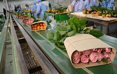 Export earnings of Ethiopia increases 10 percent