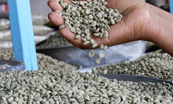 Ethiopia export income increases by $721 million