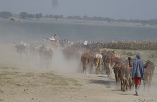 New machine learning tool to help Ethiopia track livestock diseases