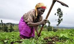 African farmers to get climatic risks insurance