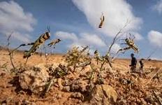 Desert locust affected people in Ethiopia get EU support