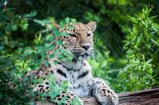 Africa Travel Week shines spotlight on animal welfare, tourism