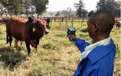 Zimbabwe launches blockchain-based livestock origin solution