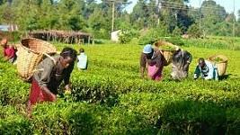 Nigeria to create special agro-industrial processing zones
