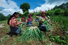 Global food systems must be disrupted and changed – new IFAD report